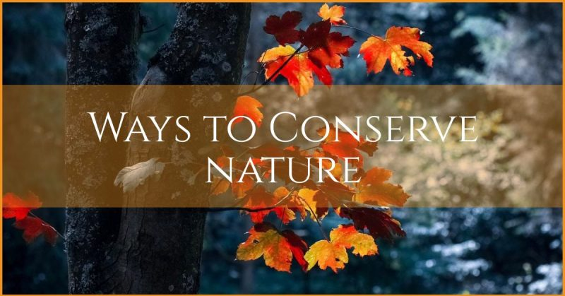 6 ways to nature conservation